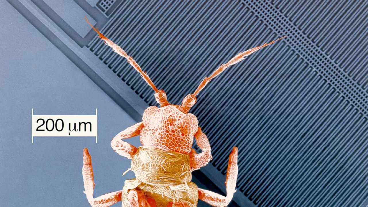 Bár kisebbek egy atkánál, a modern mikromechanikai érzékelőkben még mozgó alkatrészek is találhatók. Némely mozgó alkatrész átmérője egyetlen emberi hajszálnál is kisebb. Képünk 2001-ben készült.