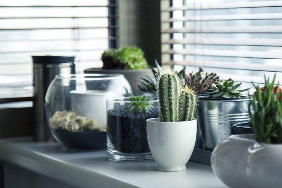 A technológia lehet a szobanövények megmentője