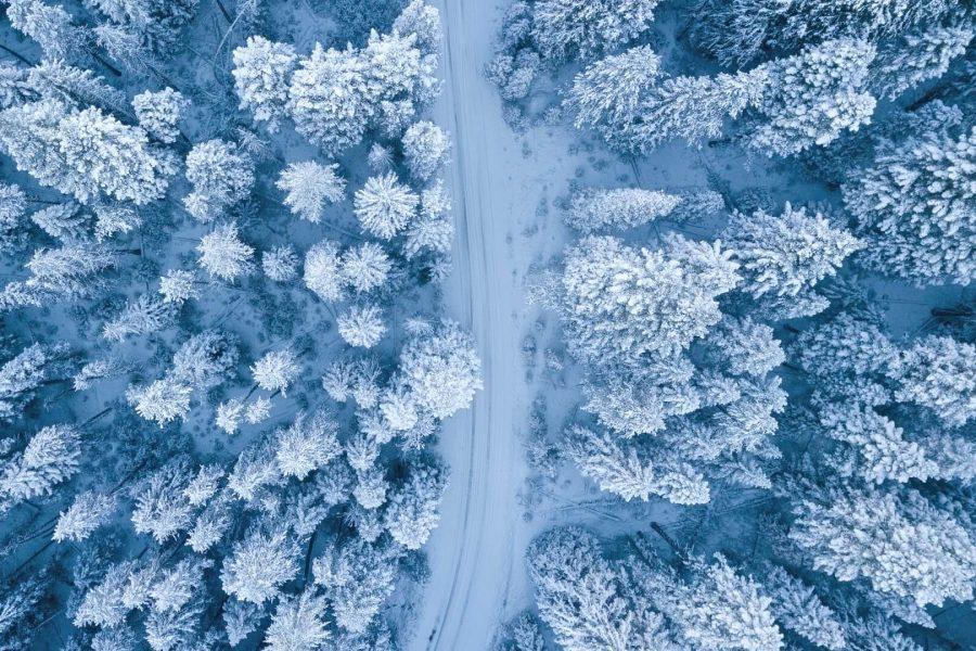 Okos erdők, avagy a fák internete