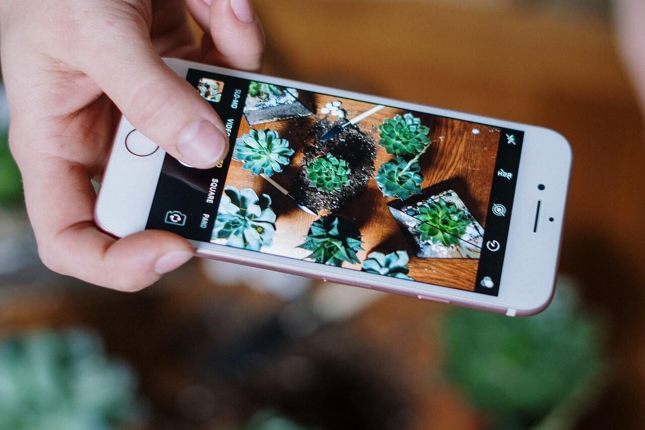 Öntözésre emlékeztető appok és okos virággyógyítás