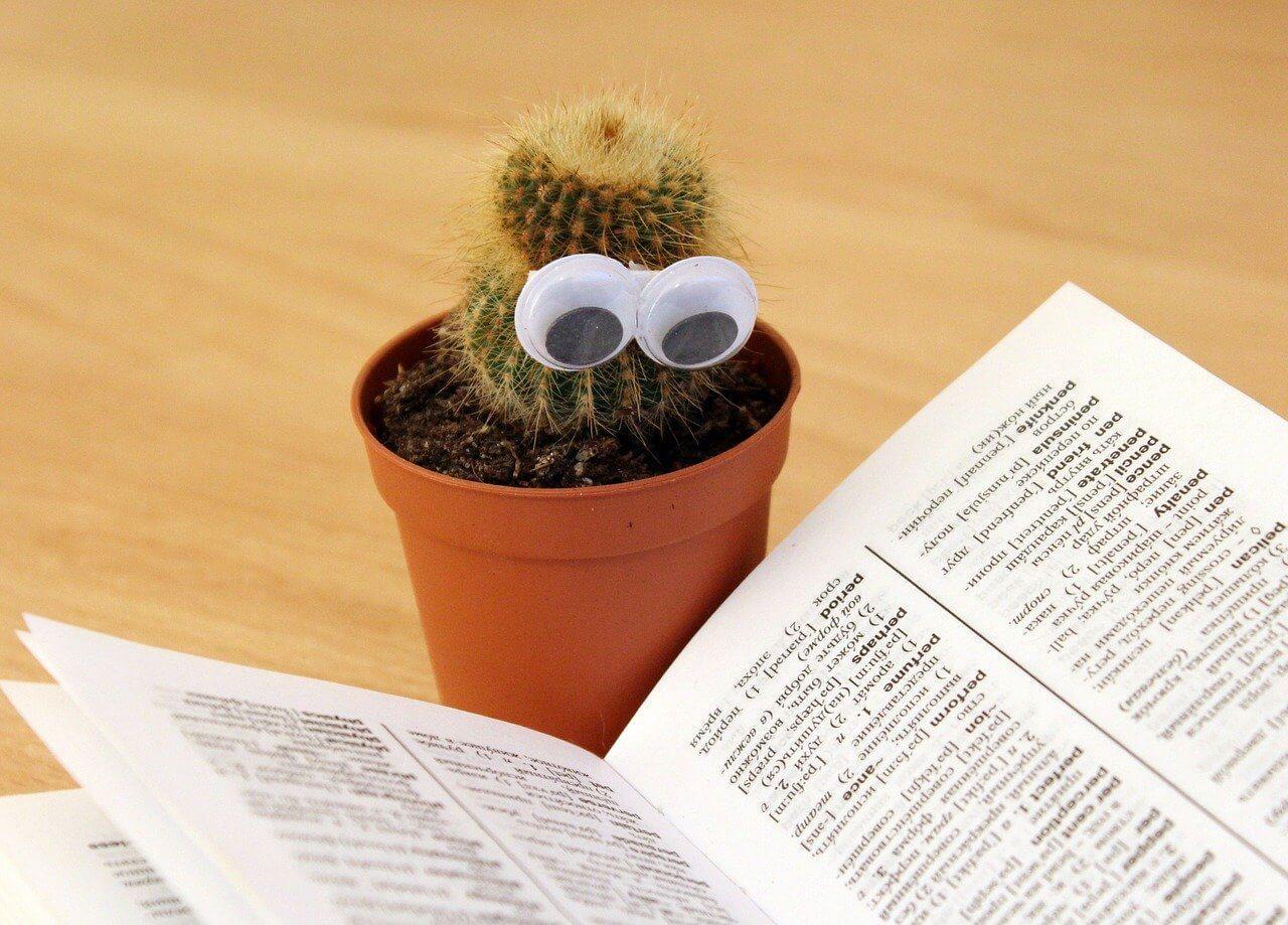 Betegségfelismerés és növényekből kiskedvencek