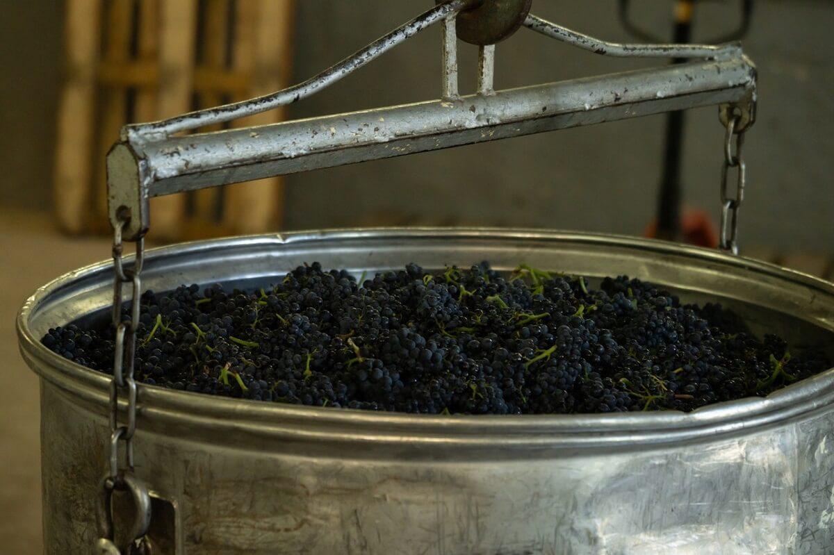 A jövő szőlőművelése nem csak kifinomult, hanem okos is