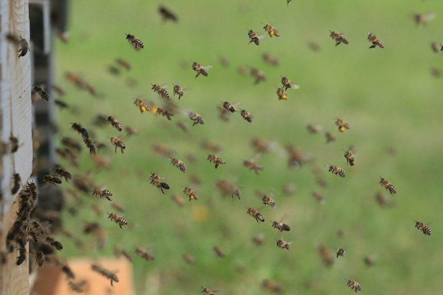 Big Data a méhek egészségéért