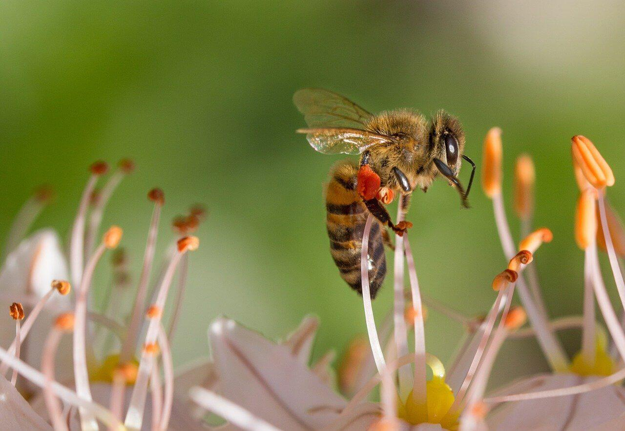 Mit tehetünk a méhekért?